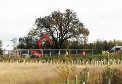 250 yıllık armut ağacı tren yolu için kesildi, İngiltere ayağa kalktı