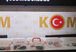 Ankarada 5 Mısır yılanı ele geçirildi