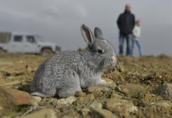 Tavşanın Kaç Ayağı Ve Kaç Dişi Vardır Kısaca Tavşanların Özellikleri