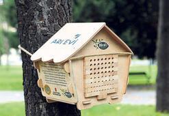 Kentlerde arı nüfusu artacak