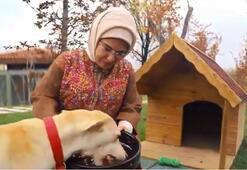 Emine Erdoğanın sahiplendiği Leblebi Külliye bahçesinde