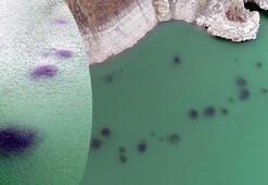 Baraj gölü yüzeyinde kümeleşen balıkların nedeni ortaya çıktı