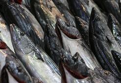 Rizede balıkçıların yüzü palamutla güldü