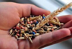 Türkiyenin yerli ve milli sebze tohumları kadınlara emanet