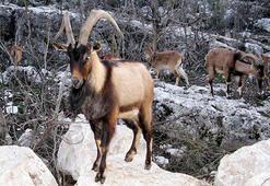 Antalya ve Ispartadaki 47 yaban hayvanı av ihalesi davalık oldu