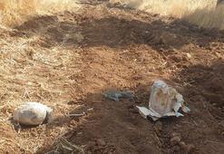 Ceylanpınar'da, yol kenarında 8 kilo patlayıcı bulundu