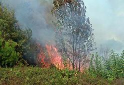 Samsun'da orman yangını 4 noktadan müdahale edildi