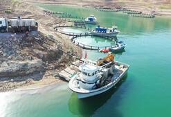 Kayseride Yamula Barajında 1400 ton somon balığı üretildi