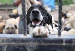 Hayvan Hakları Yasası yeni yılda Meclis'te