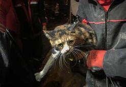 K-9 köpeği enkaz altında kalan kediyi kurtardı