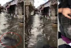 İzmirde tsunamiye kapılan babaannesini görünce yıkıldı