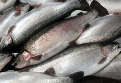 Karadeniz somonu ihracatı yüzde 33 arttı