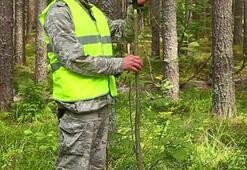Orman Mühendisi Nedir, Nasıl Olunur Orman Mühendisliği Mezunu Ne İş Yapar