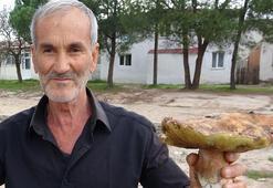 Ayı mantarı köylünün gelir kapısı oldu Kilosu 25 TL...