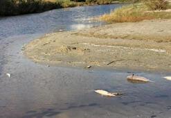 Silivri'de büyük tedirginlik Ölü balıklar kıyıya vurdu