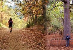 Türkiyenin tek kasnak meşesi ormanına randevusuz giriş yasak