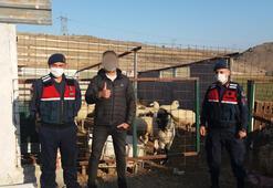 Çobanın kaybettiği 55 küçükbaş, dronela bulundu