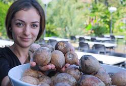 Avokado talebine yetişemeyen üreticiler çekirdek toplamaya başladı