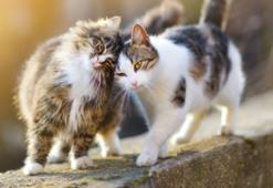 Erken Teşhis Kedilerin de Hayatını Kurtarıyor