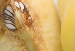 Kışın hamilelerin bağışıklık sistemini güçlendiren sebzeler ve meyveler