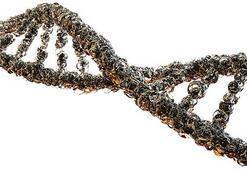 Genetik Ve Biyomühendislik Bölümü Nedir, Dersleri Nelerdir Mezunu Ne İş Yapar