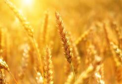Tarım Ekonomisi Bölümü Nedir, Dersleri Nelerdir Mezunu Ne İş Yapar