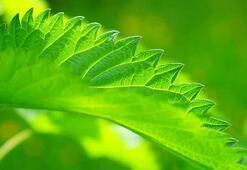 Bitki Koruma Bölümü Nedir, Dersleri Nelerdir Mezunu Ne İş Yapar
