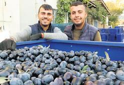 Burhaniye'de üretici mutlu