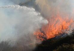 Antalyada korkutan yangın 5 dekar alan kül oldu