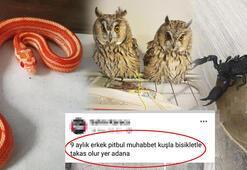 İnternetten hayvan satanlara tepki Yılan, baykuş, akrep bile satıyorlar