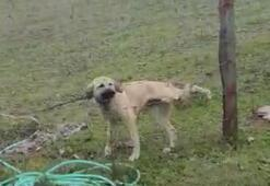 Bacağı tele takılan köpeği kurtardı