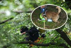 Son dakika... Almanyada tüyler ürperten olay Yamyamı arama köpekleri buldu