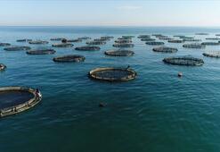 Doğu Karadeniz su ürünleri ihracatından 44,2 milyon dolar kazandı