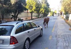 Bodrum'da başıboş at trafiği birbirine kattı