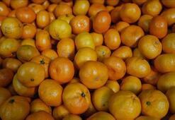 Türkiye 1 ayda 110 milyon dolarlık mandalina ihraç etti