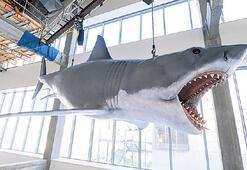25 metrelik  'Jaws' modeli Akademi Müzesi'nde