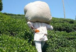 Çay üreticisine 13 kuruş fark