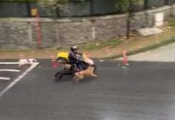 Başıboş köpekler mahalleliye korku dolu anlar yaşattı