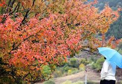 İklim değişikliği nedeniyle sonbahar  erken gelecek