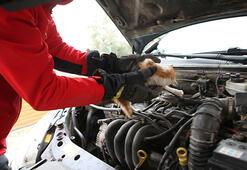 Araçların motoruna giren kedi, itfaiye ekiplerine zor anlar yaşattı