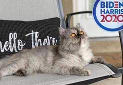 Beyaz Saraya first kedi geliyor