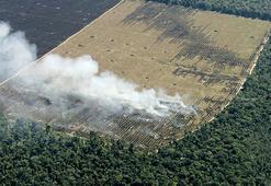 Amazon alarm veriyor... Kayıp 12 yılın en yüksek düzeyinde