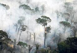 Amazon yağmur ormanları tükeniyor