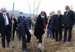 Samsun'da çiftçilere 37 bin meyve fidanı dağıtımına başlandı
