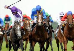 Atlar koşacak; hafta sonunda bahisler e-Bayi'den oynanacak