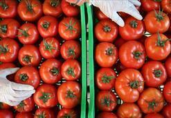 Kasımda fiyatı en fazla artan ürün domates