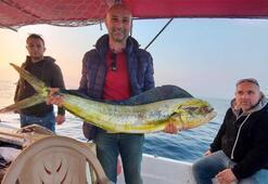 Kuşadası Körfezi'nde 15 kiloluk lambuka balığı yakalandı