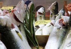 Denizlerin prensi lüfer bollaşınca tezgahta fiyatı düşüşe geçti
