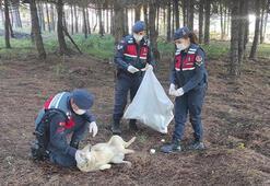 Jandarma sokak hayvanları için mesire alanlarına ekmek bıraktı