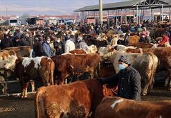 Türkiye'nin en büyük canlı hayvan pazarı perşembe günleri kurulacak